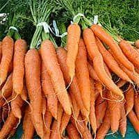 food-carrot
